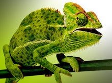 SUSE Linux 12 challenges Red Hat