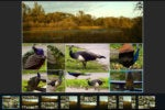 Photoshop Express 5 for iOS review: Adobe boosts app with brilliant collage feature